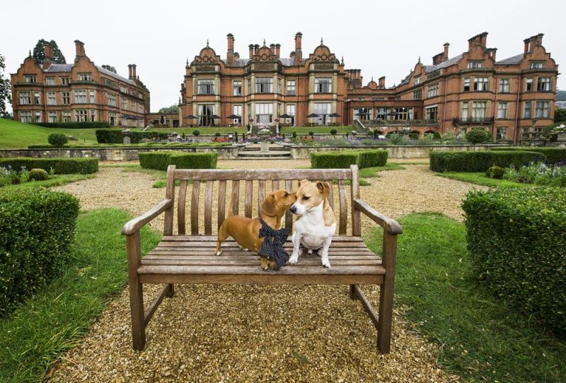 Hallmark Hotels launch Pawfect Package  at its 28 hotels across UK on National Dog Day (26th August). Picture date: 26 August, 2016. Photo credit: Katja Ogrin/ EMPICS Entertainment.