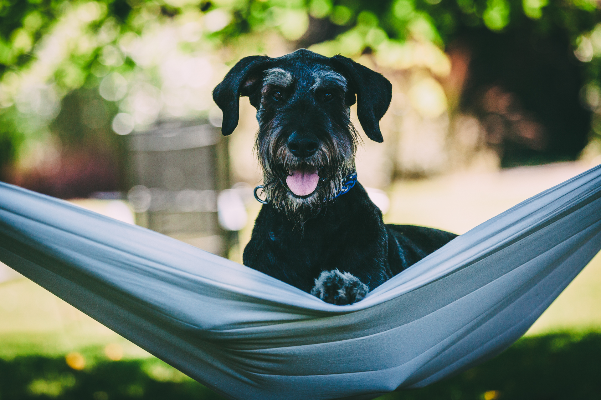 Top 6 The Trends Driving The Dog Friendly Travel Market In 2019
