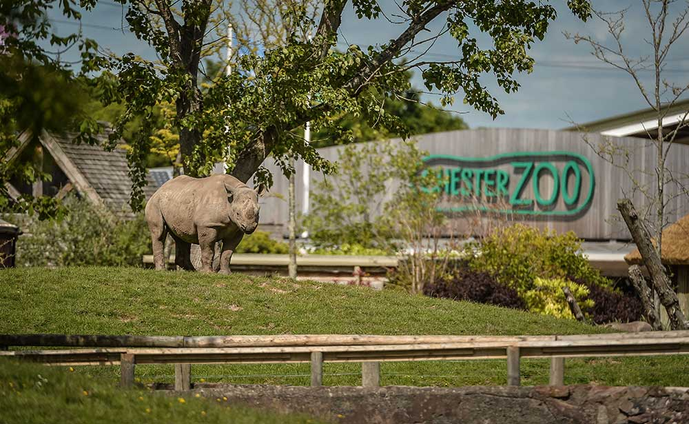 Chester-Zoo-rhino-2030-vision